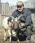 информация перечню бараны рога в череп врастают виды